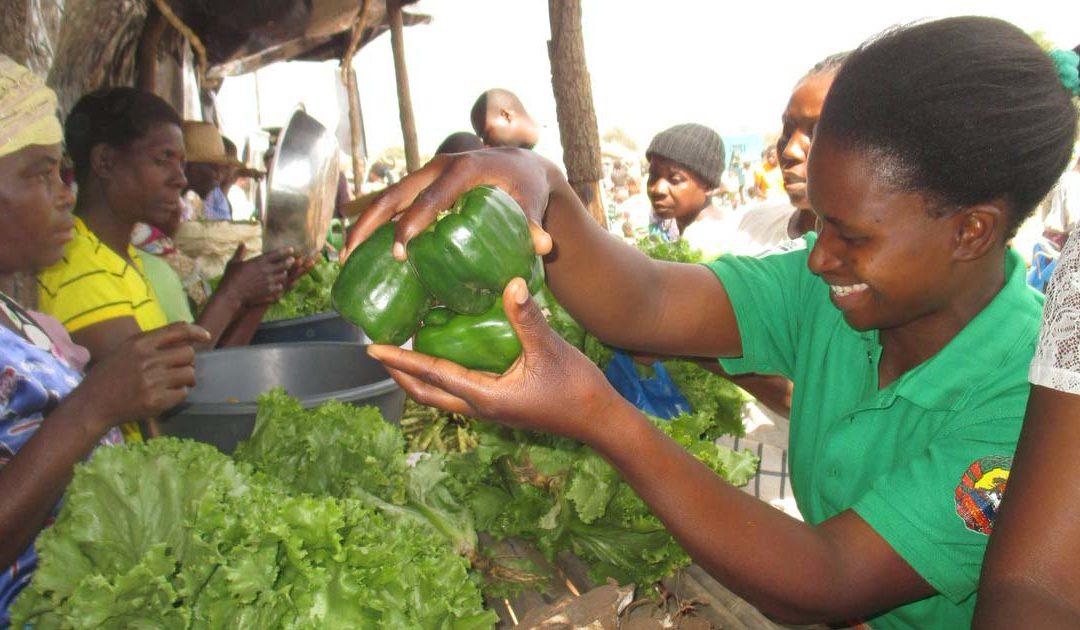 Sustainability & volunteering