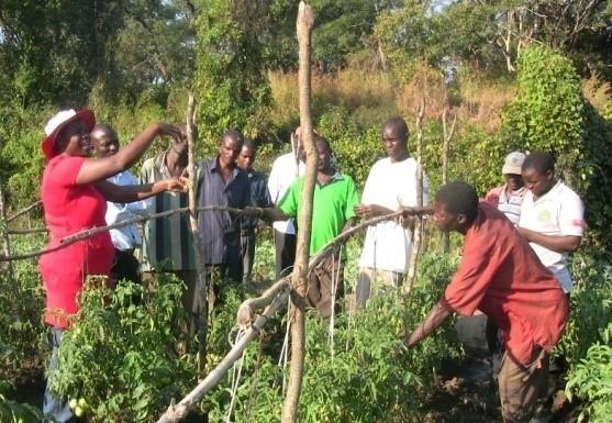DAPP Zambia Farmer's Clubs