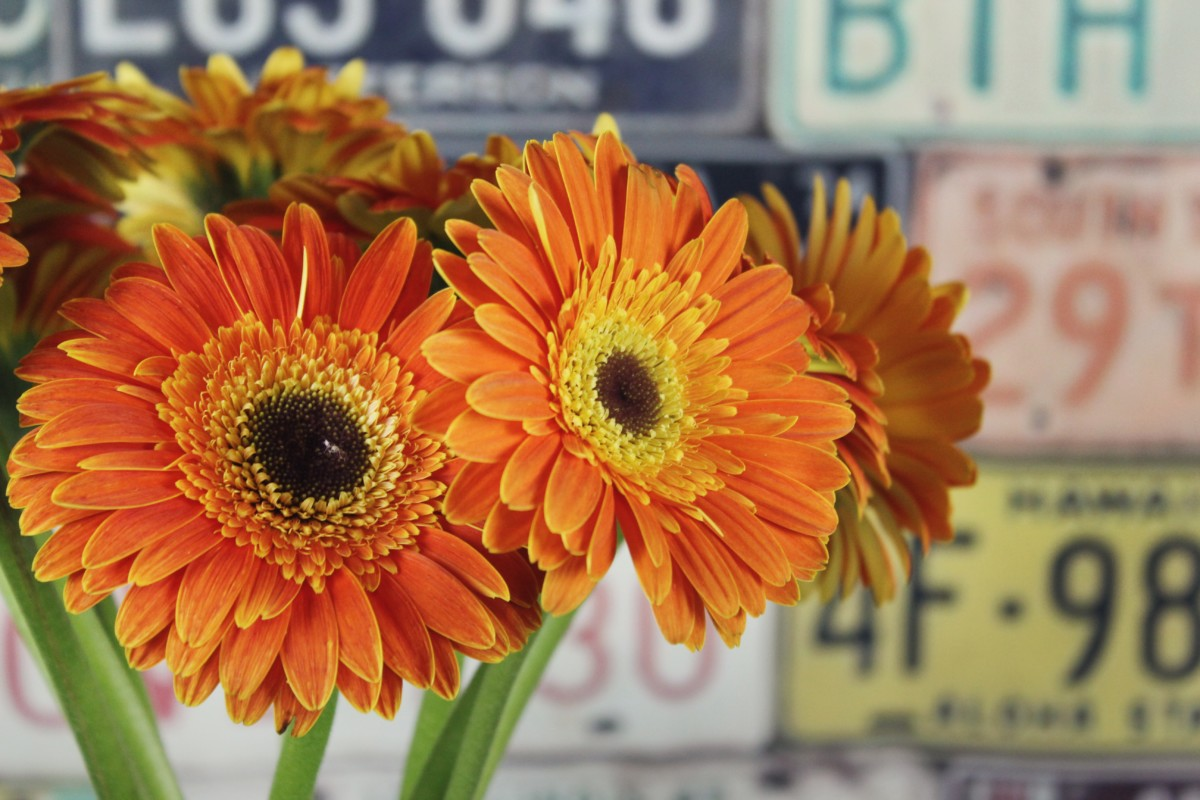 Cut Flower Industry Dangers