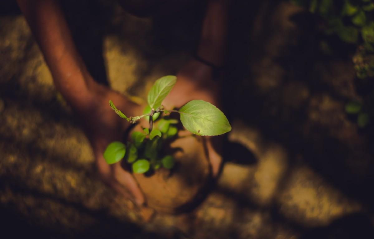 Tree-Planting Record 2019 Ethiopia