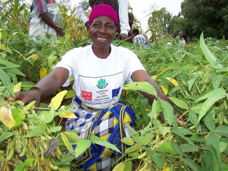 DAPP Malawi Farmers' Club